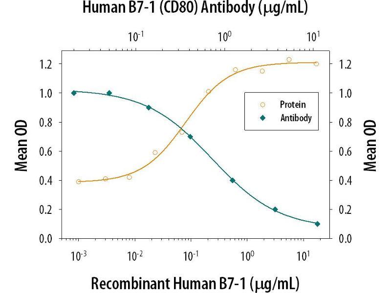 Neutralization (Neut) image for anti-CD80 (CD80) (AA 35-242) antibody (ABIN4900274)