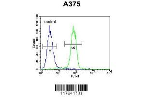 Image no. 1 for anti-Endothelin-Converting Enzyme 1 (ECE1) (AA 528-556), (C-Term) antibody (ABIN652254)
