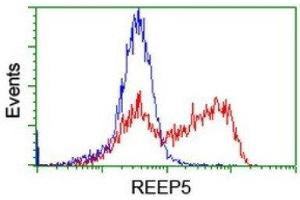 Flow Cytometry (FACS) image for anti-Receptor Accessory Protein 5 (REEP5) antibody (ABIN4349817)