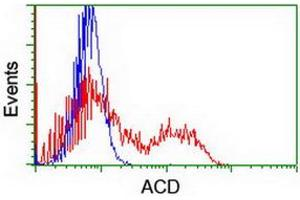 Flow Cytometry (FACS) image for anti-Adrenocortical Dysplasia Homolog (Mouse) (ACD) antibody (ABIN2715649)