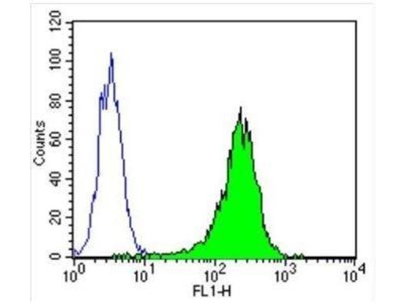 Flow Cytometry (FACS) image for anti-Tubulin, beta (TUBB) (N-Term) antibody (ABIN4284184)