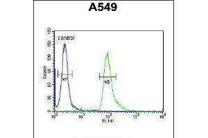 Image no. 3 for anti-Abhydrolase Domain Containing 12 (ABHD12) (AA 40-66), (N-Term) antibody (ABIN5530229)