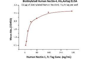 Image no. 1 for Poliovirus Receptor-Related 4 (PVRL4) (AA 32-349) (Active) protein (His tag,AVI tag,Biotin) (ABIN6938938)