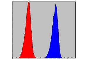 Flow Cytometry (FACS) image for anti-conserved Helix-Loop-Helix Ubiquitous Kinase (CHUK) antibody (ABIN931520)