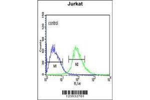 Image no. 2 for anti-Calcium Activated Nucleotidase 1 (CANT1) (AA 1-30), (N-Term) antibody (ABIN652769)