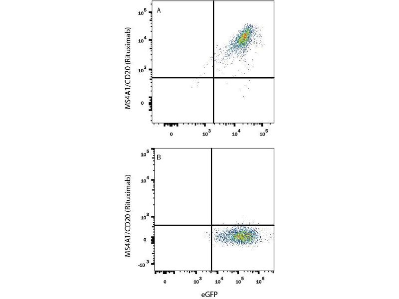 Flow Cytometry (FACS) image for anti-Rituximab Antibody antibody (ABIN5666516)