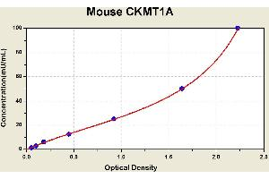 Image no. 1 for Creatine Kinase, Mitochondrial 1A (CKMT1A) ELISA Kit (ABIN1114412)