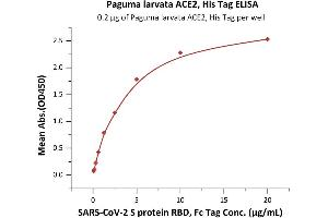 Image no. 4 for Angiotensin I Converting Enzyme 2 (ACE2) protein (His tag) (ABIN6952704)