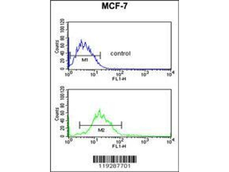 Flow Cytometry (FACS) image for anti-Endonuclease G antibody (ENDOG) (AA 188-217) (ABIN390490)