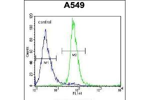 Image no. 2 for anti-Zinc Finger Protein 324B (ZNF324B) (AA 507-535), (C-Term) antibody (ABIN5539000)