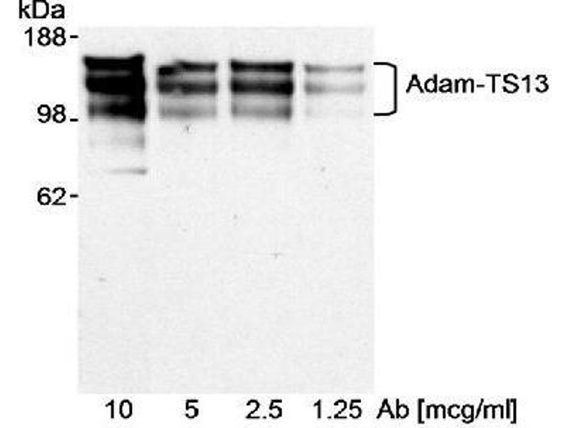 Western Blotting (WB) image for anti-ADAM Metallopeptidase with Thrombospondin Type 1 Motif, 13 (ADAMTS13) (AA 250-350) antibody (ABIN152016)