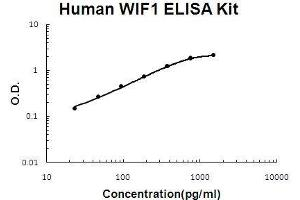 Image no. 1 for WNT Inhibitory Factor 1 (WIF1) ELISA Kit (ABIN5510691)