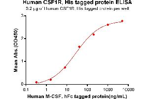 Image no. 1 for Colony Stimulating Factor 1 Receptor (CSF1R) protein (His tag) (ABIN6961125)