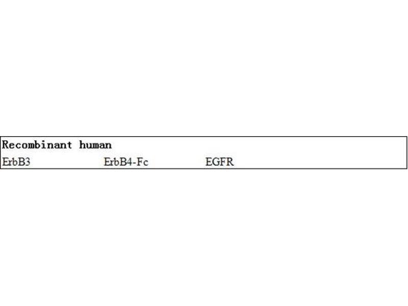 V-Erb-B2 erythroblastic Leukemia Viral Oncogene Homolog 2, Neuro/glioblastoma Derived Oncogene Homolog (Avian) (ERBB2) ELISA Kit (2)