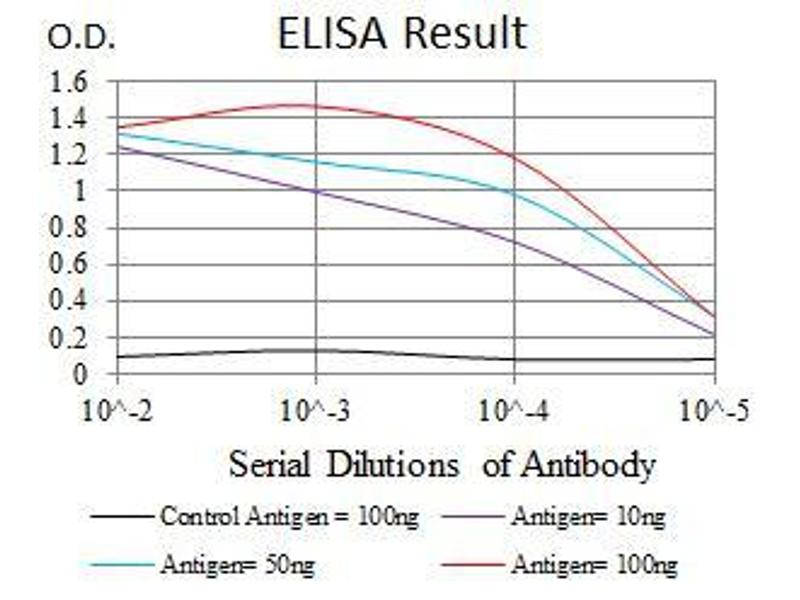 ELISA image for anti-Argininosuccinate Synthase 1 (ASS1) antibody (ABIN969503)
