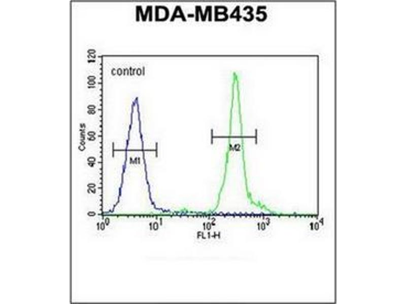 Flow Cytometry (FACS) image for anti-GFRAL antibody (GDNF Family Receptor alpha Like) (AA 366-394) (ABIN952506)