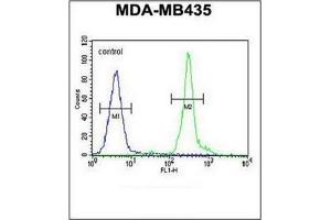 Flow Cytometry (FACS) image for anti-GDNF Family Receptor alpha Like (GFRAL) (AA 366-394), (C-Term) antibody (ABIN952506)