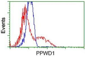 Image no. 1 for anti-Peptidylprolyl Isomerase Domain and WD Repeat Containing 1 (PPWD1) antibody (ABIN2729526)