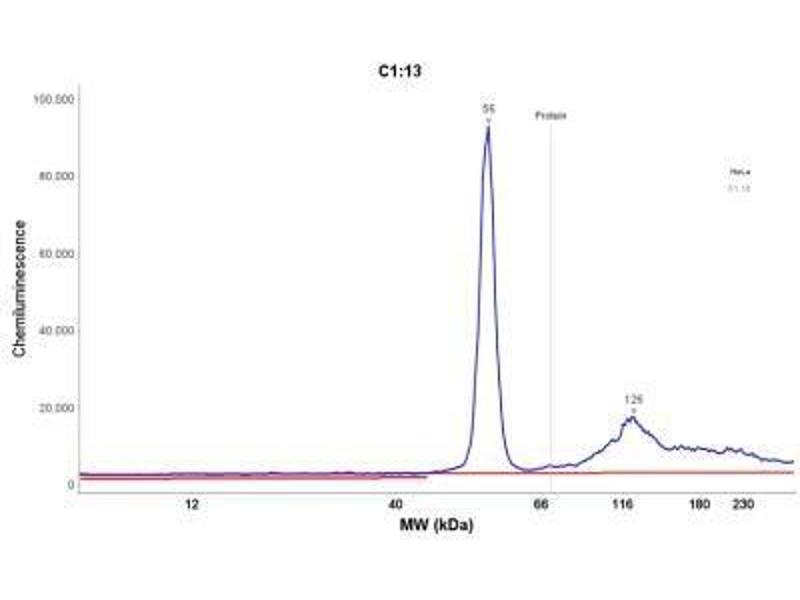 Simple Western (SimWes) image for anti-Keratin 18 (KRT18) antibody (ABIN4302634)