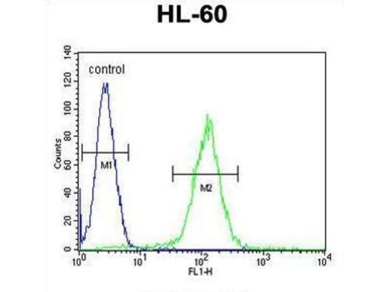 Image no. 1 for anti-Olfactory Receptor, Family 10, Subfamily J, Member 5 (OR10J5) antibody (ABIN2996119)