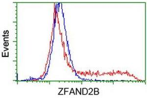 Image no. 2 for anti-Zinc Finger, AN1-Type Domain 2B (ZFAND2B) antibody (ABIN1501806)