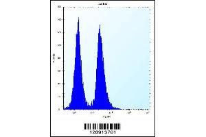 Image no. 1 for anti-Keratin Associated Protein 13-3 (KRTAP13-3) (AA 108-135), (C-Term) antibody (ABIN5538536)