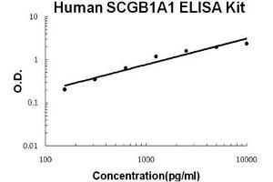 Image no. 1 for Secretoglobin, Family 1A, Member 1 (Uteroglobin) (SCGB1A1) ELISA Kit (ABIN1672838)