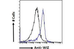 Image no. 2 for anti-Zinc Finger Protein 803 (ZNF803) (Internal Region) antibody (ABIN570947)