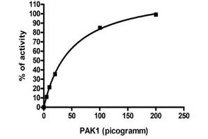 Image no. 1 for P21-Activated Kinase 1 (PAK1) (AA 248-545) protein (ABIN5569917)