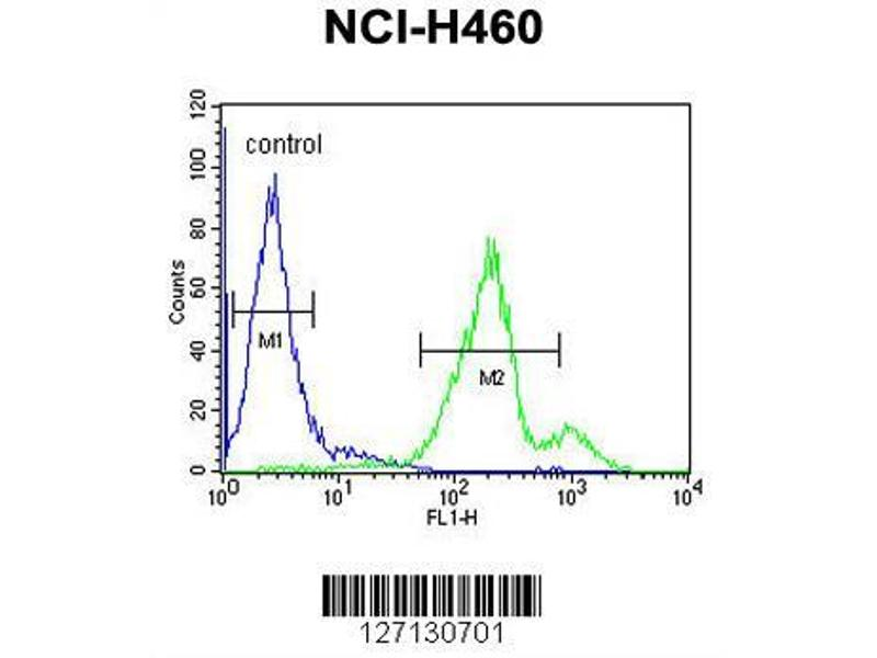 Flow Cytometry (FACS) image for anti-SC31B (AA 1076-1104), (C-Term) antibody (ABIN651805)
