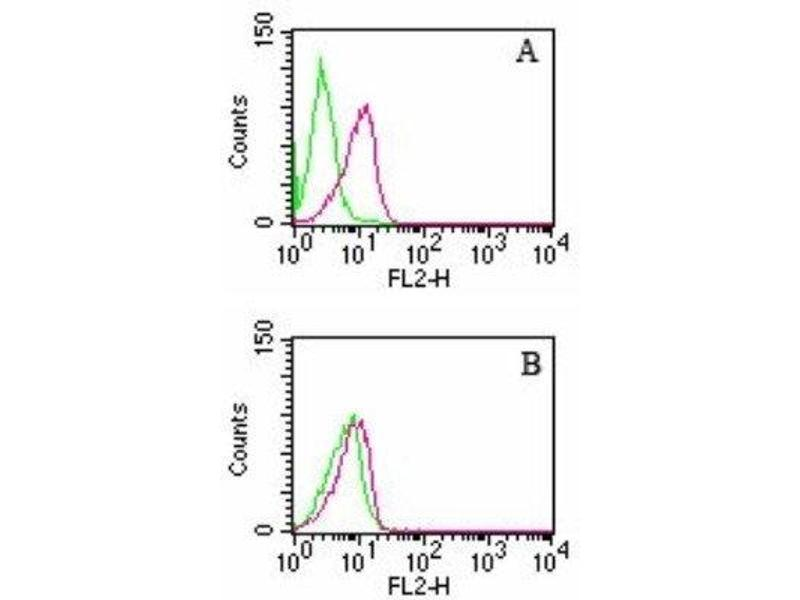 Flow Cytometry (FACS) image for anti-rho GDP Dissociation Inhibitor (GDI) beta (ARHGDIB) antibody (ABIN252512)