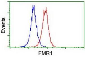 Image no. 16 for anti-Fragile X Mental Retardation 1 (FMR1) (AA 36-279) antibody (ABIN1491454)