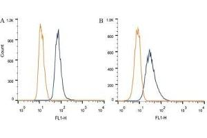 Flow Cytometry (FACS) image for anti-EIF4G2 antibody (Eukaryotic Translation Initiation Factor 4 gamma 2) (ABIN265943)
