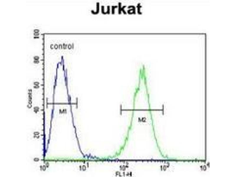 Image no. 1 for anti-Membrane Protein, Palmitoylated 1, 55kDa (MPP1) (AA 304-331), (Middle Region) antibody (ABIN953491)