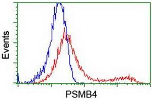 Image no. 2 for anti-Proteasome (Prosome, Macropain) Subunit, beta Type, 4 (PSMB4) antibody (ABIN1500470)