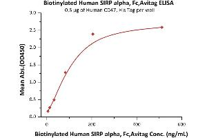 Image no. 2 for Signal-Regulatory Protein alpha (SIRPA) (AA 31-370) (Active) protein (Fc Tag,AVI tag,Biotin) (ABIN5526677)