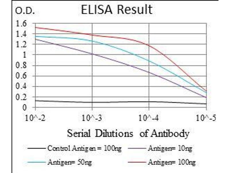 Image no. 1 for anti-Goosecoid Homeobox (GSC) (AA 191-257) antibody (ABIN1724853)