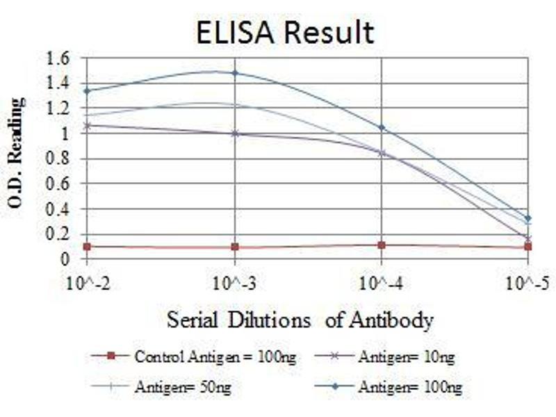 ELISA image for anti-ATM antibody (Ataxia Telangiectasia Mutated) (ABIN968969)