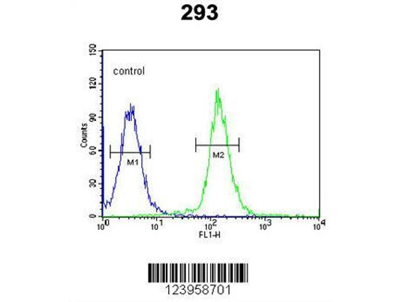 Flow Cytometry (FACS) image for anti-CDC45 antibody (Cell Division Cycle 45 Homolog (S. Cerevisiae)) (AA 236-263) (ABIN653837)