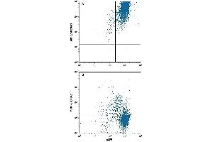 Flow Cytometry (FACS) image for anti-Solute Carrier Family 16, Member 1 (Monocarboxylic Acid Transporter 1) (SLC16A1) (AA 1-500) antibody (Allophycocyanin) (ABIN4895671)