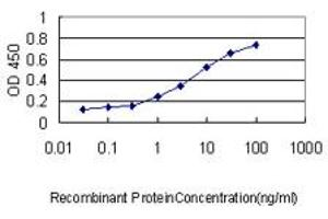 Image no. 1 for anti-Peptidylprolyl Isomerase A (Cyclophilin A) (PPIA) (AA 1-165) antibody (ABIN562340)