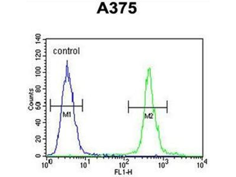 Flow Cytometry (FACS) image for anti-ALS2CR11 antibody (Amyotrophic Lateral Sclerosis 2 (Juvenile) Chromosome Region, Candidate 11) (N-Term) (ABIN950383)