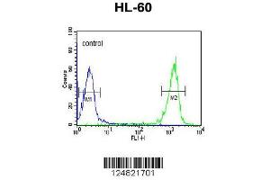 Image no. 3 for anti-Protein Associated with Topoisomerase II Homolog 1 (Yeast) (PATL1) (AA 489-518), (C-Term) antibody (ABIN653753)