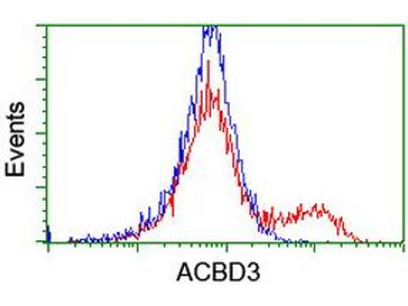 Image no. 1 for anti-Acyl-CoA Binding Domain Containing 3 (Acbd3) antibody (ABIN2715645)