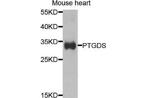 Image no. 1 for anti-Prostaglandin D2 Synthase (PTGDS) antibody (ABIN6568963)