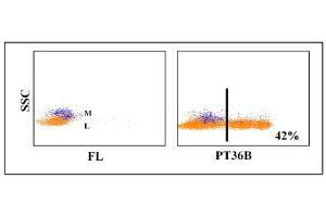 Flow Cytometry (FACS) image for anti-CD8a Molecule (CD8A) antibody (ABIN5604421)