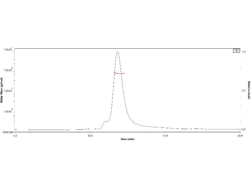 Image no. 3 for SARS-CoV-2 Spike (Trimer) (Active) protein (His tag) (ABIN6952523)