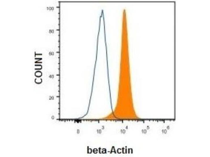 Flow Cytometry (FACS) image for anti-beta Actin antibody (Actin, beta) (N-Term) (ABIN153388)