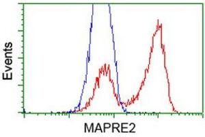 Image no. 2 for anti-Microtubule-Associated Protein, RP/EB Family, Member 2 (MAPRE2) antibody (ABIN2725480)