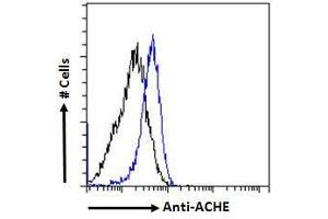 Image no. 8 for anti-Acetylcholinesterase (AChE) (C-Term) antibody (ABIN185357)